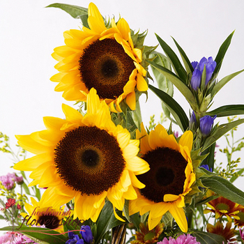 Sunflower basket for some in HCM city