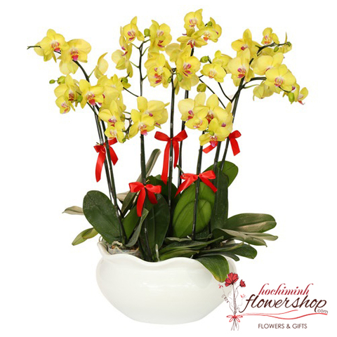 YELLOW PHALAENOPSIS DELIVERY IN HOCHIMINH